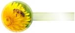 Etikety samolepící na víčko sklenice PAMPELIŠKA
