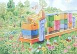 Pohlednice Včelí úly na jaře
