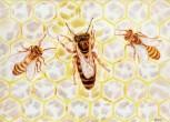 Pohlednice Včelí královna